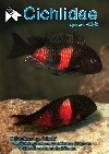 Two so-called Double Spot Moorii, Tropheus sp. \