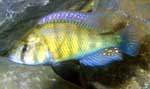 Male in the aquarium