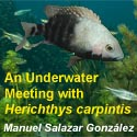 An Underwater Meeting with Herichthys carpintis