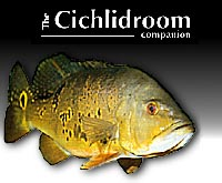 Cichlid Room Companion